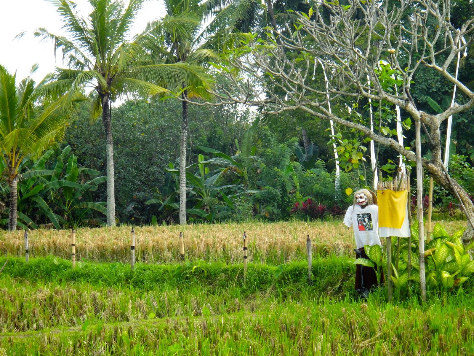 Bebek Tepi Sawah Rice Field Ubud Bali Scarecrow