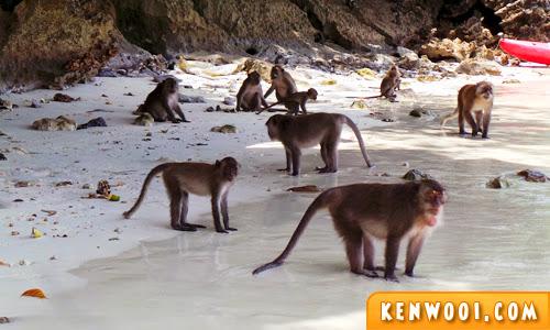 phi phi don monkey bay