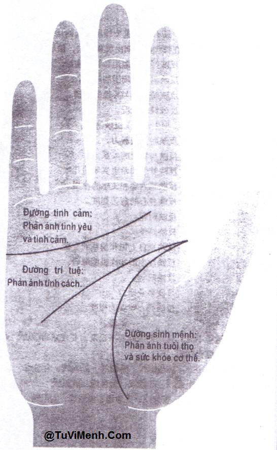 [Tướng tay] - 3 đường chỉ tay cơ bản trên bàn tay