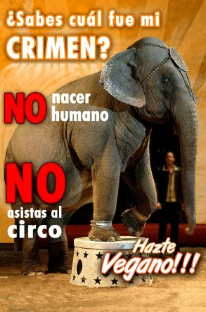 Muy humano: &#39;Circos&#39; con animales.