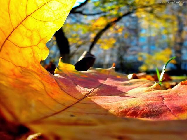 spokój, nadzieja na blogu decoupage Eco Manufaktura