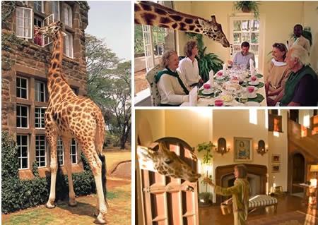 Giraffe Manor (Kenya): where you dine with a friendly giraffe