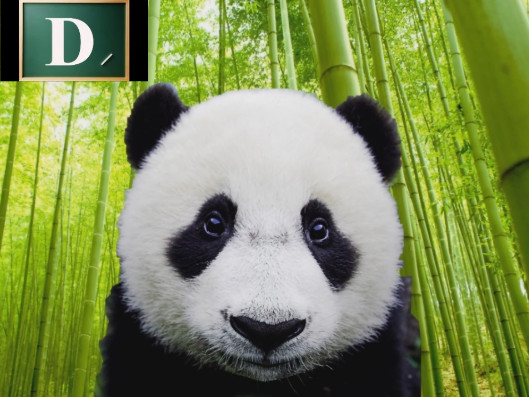 Fin Fan Fun Animal Sounds  Learn English Alphabet With Panda - Animation e1e22d4caf