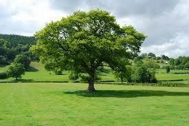 Manfaat Lingkungan Hidup Bagi Kehidupan Makhluk Hidup