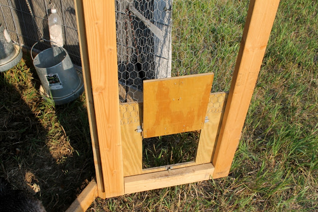 Pop hole chicken door!