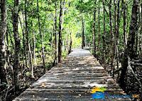 jembatan mangrove karimunjawa