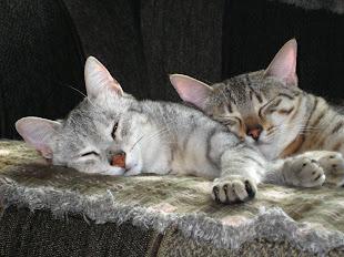 Sheriti & Kissa