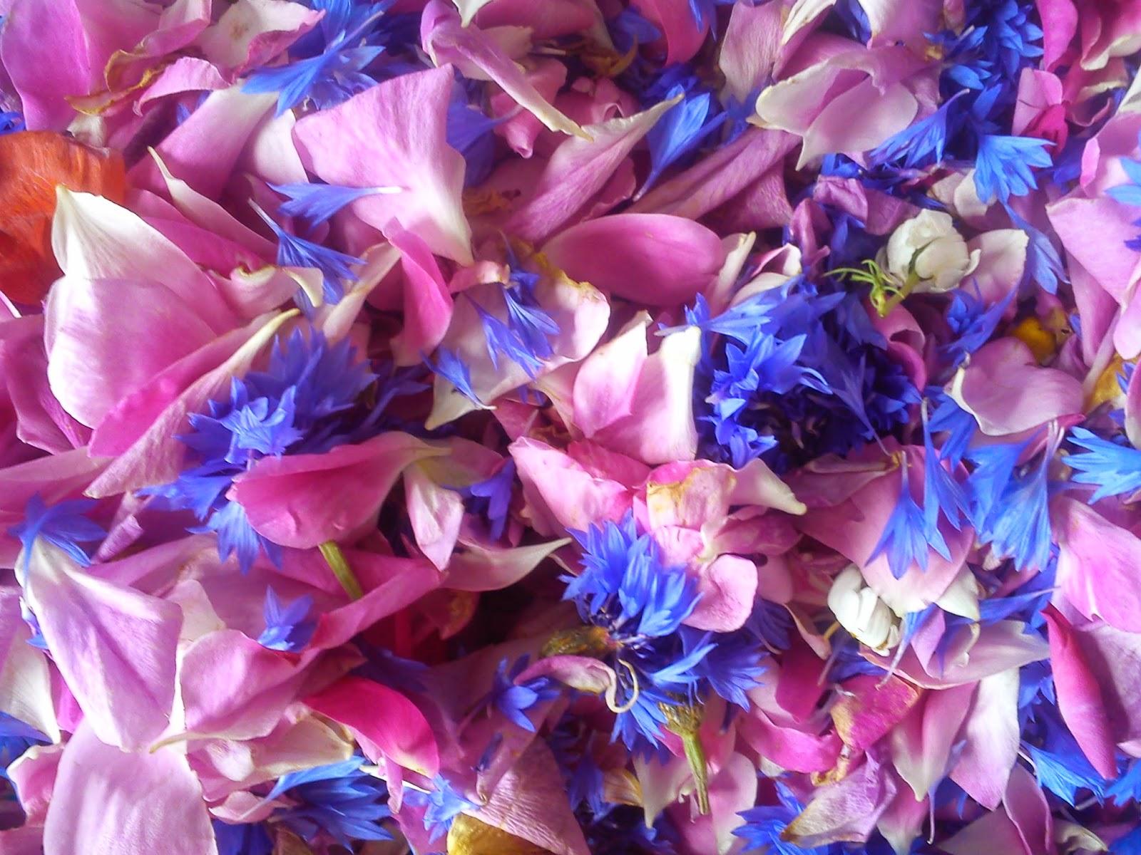 O sypaniu kwiatków i chabrowym poletku