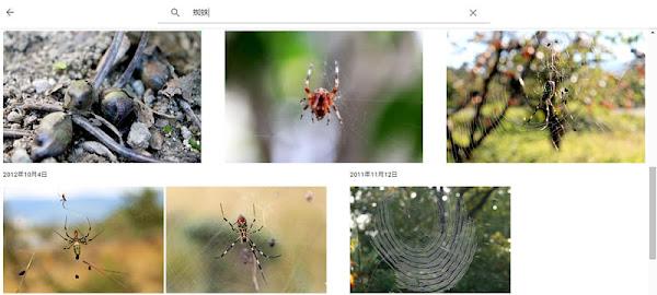 Googleフォトで「蜘蛛」を検索