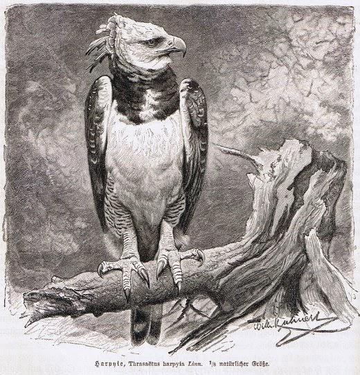 """Die Harpyie – ein herausgestrichenes Kapitel aus """"Letzten Montag habe ich das Böse besiegt"""""""