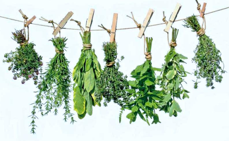 ANGELA  Y MAS     HERBOLARIO  Las cualidades de las plantas