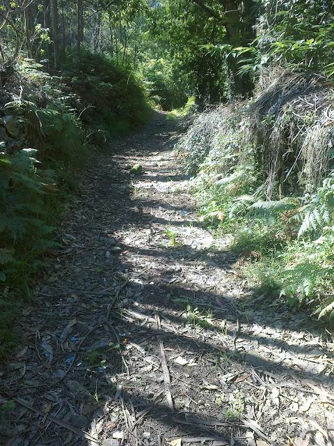 Pista forestal en Argalo Noia