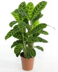 Que significa soñar con plantas