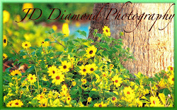 JD. Diamond Photography