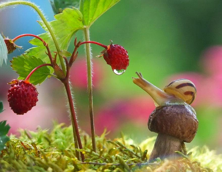 mundo miniatura de los caracoles