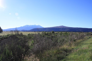 Mt Tongariro in the distance. It is snowcapped and the sky is very blue.
