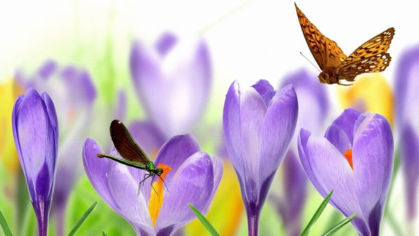 Cute Butterfly with Flowers Pictures Widescreen