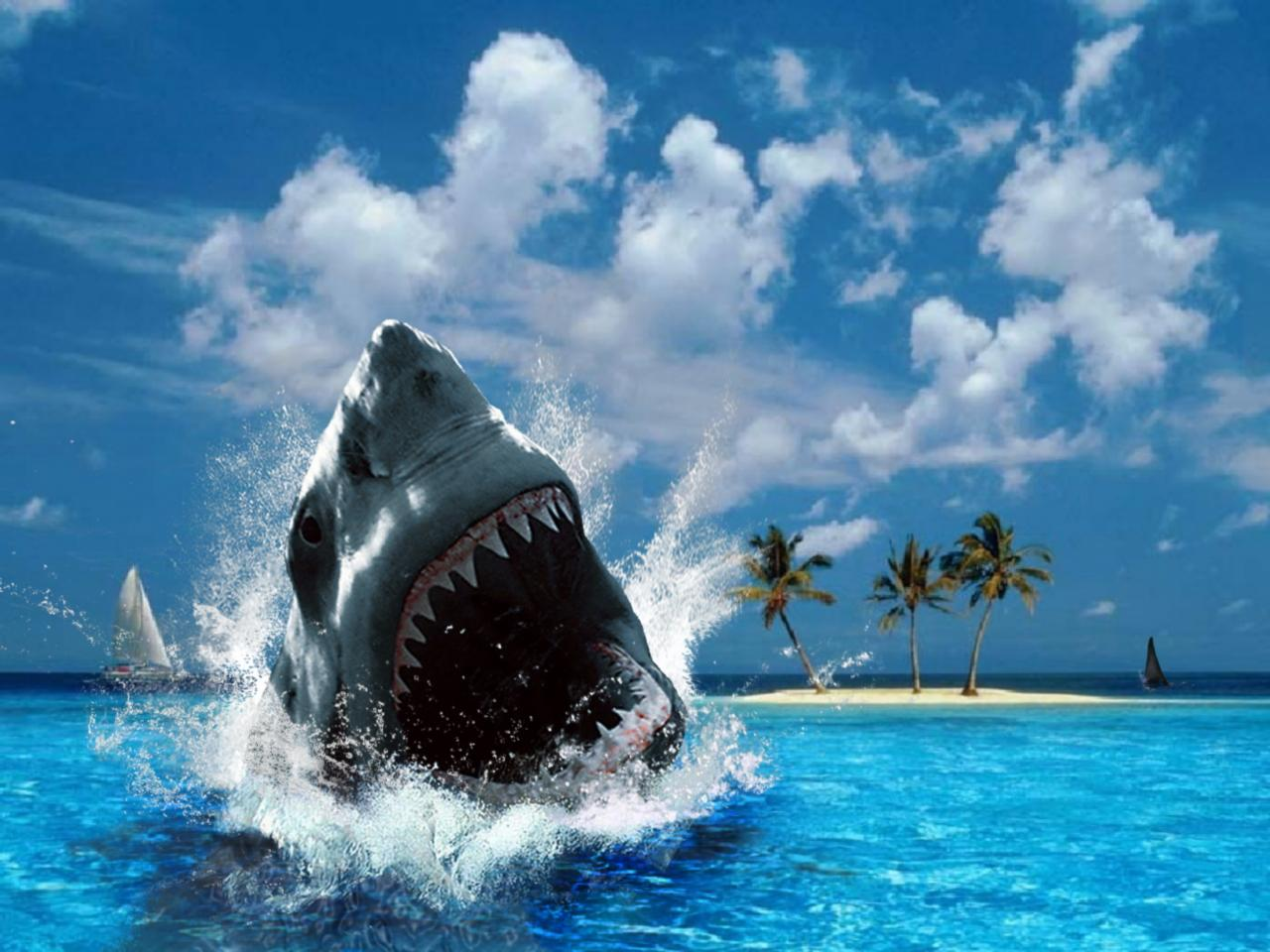 download wallpaper shark 1600 - photo #44