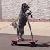 Ο σκύλος που βάζει πλυντήριο, παίζει πιάνο, οδηγεί σκούτερ και όχι μόνο... [video]