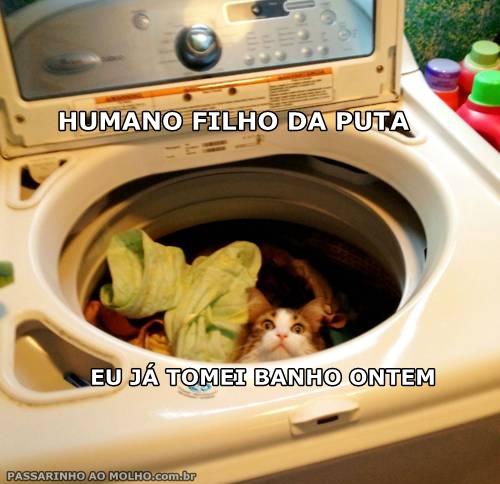 gato na máquina de lavar, banho do gato