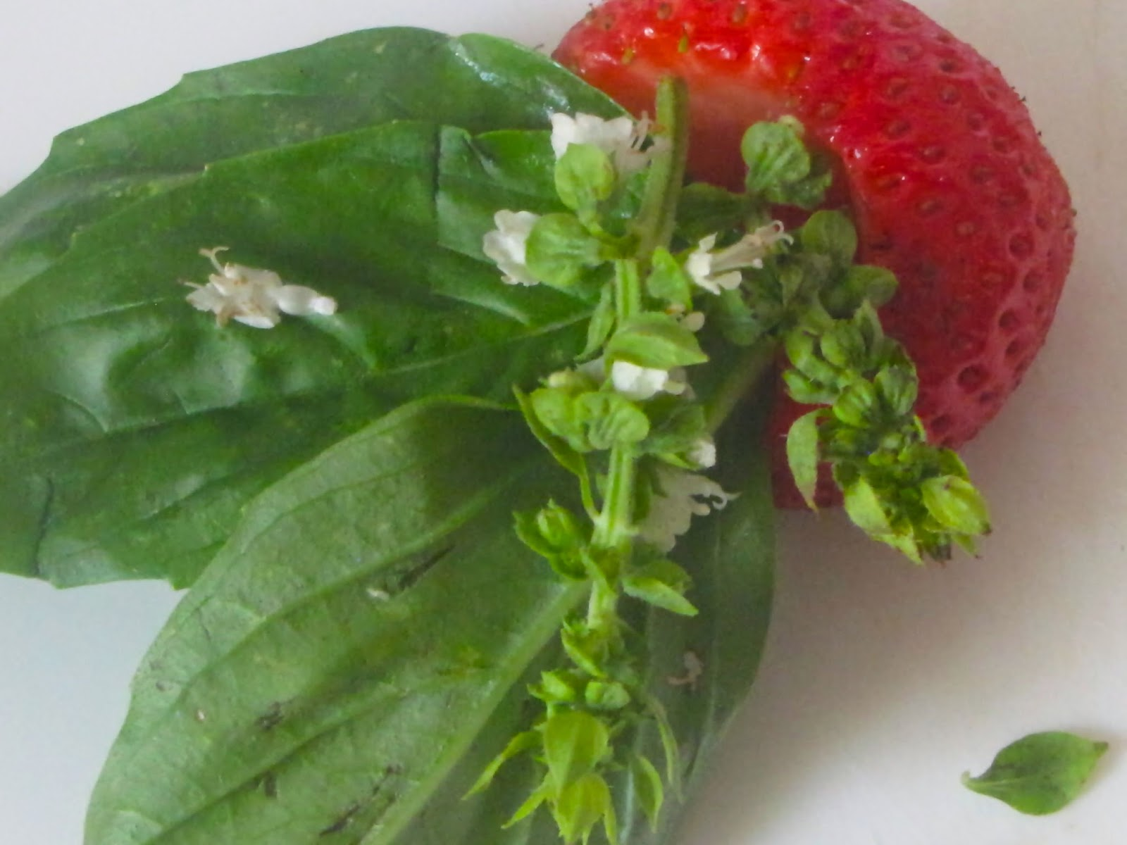 A hulled strawberry holding basil flowers and leaves