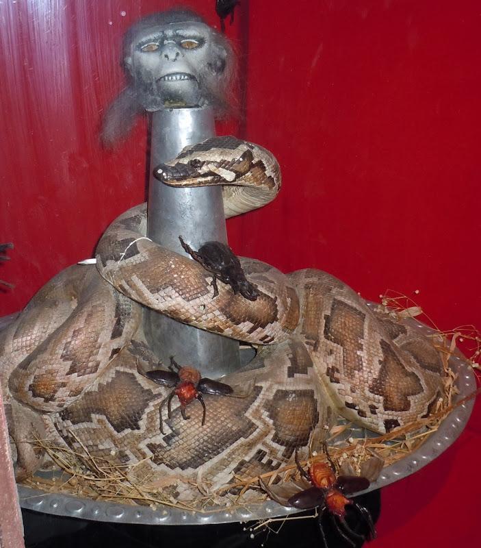 Chilled monkey brains Indiana Jones banquet prop