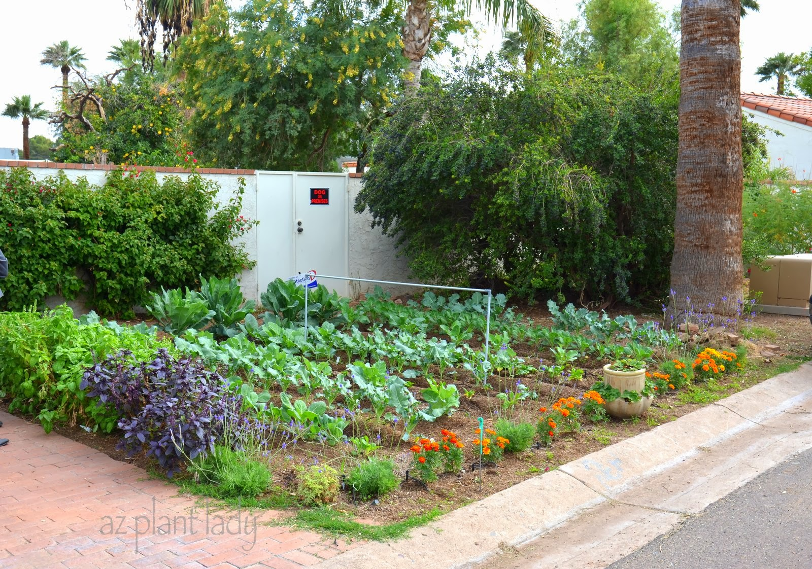 Vegetable gardens in unexpected places ramblings from a desert garden - Vegetable garden in small space decoration ...