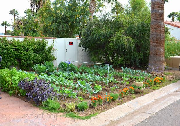 Small Yard Vegetable Garden Ideas