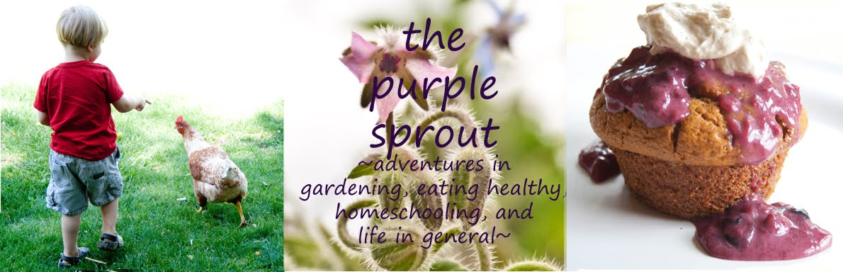 The Purple Sprout