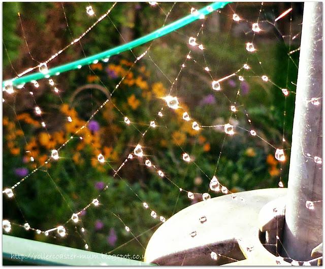 sparkling spider's web