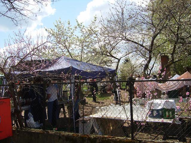 obstgarten auf dem baumblütenfest