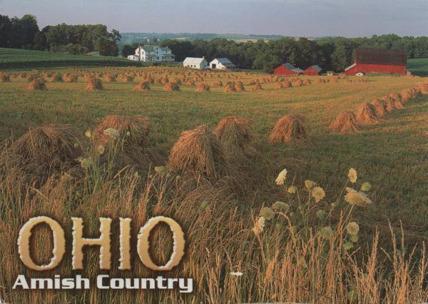 field of wheat shocks