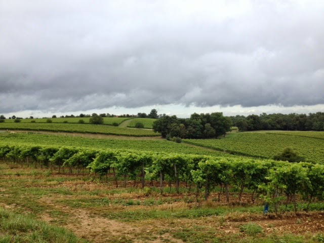 French Village Diaries Organic Charente Vineyards