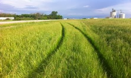 green road grass- It's Not Going To Turn Out The Way You Thought