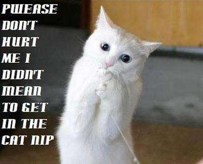 Kumpulan Gambar Foto Kucing Lucu Gokil Terbaru 2014