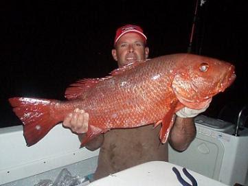 Ikan Merah