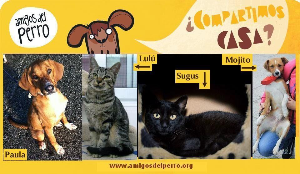 Animales en Adopción
