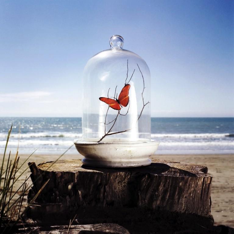 Sommerfugl i glasklokke