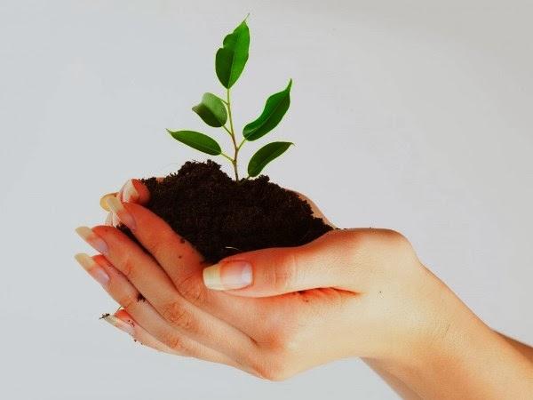 Projeto de arborização da UEPB vai intensificar distribuição de mudas em 2014
