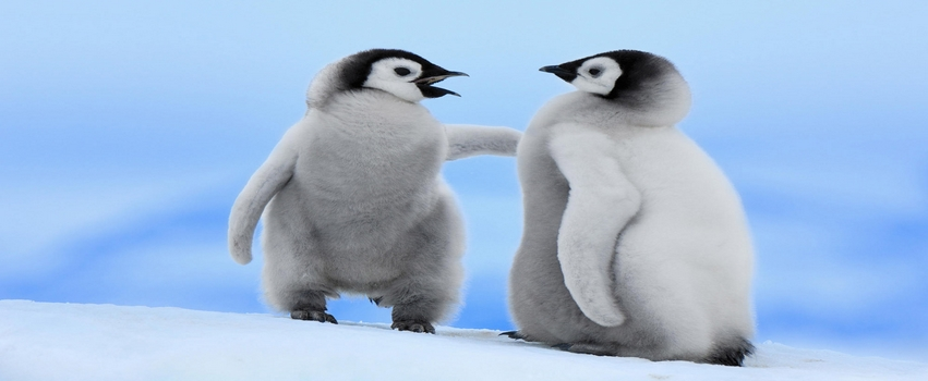 Two Little Penguin