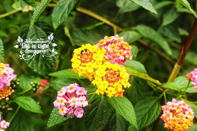 bunga cantik turgo