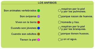 http://primerodecarlos.com/SEGUNDO_PRIMARIA/diciembre/Unidad5/actividades/cono/anfibios.swf
