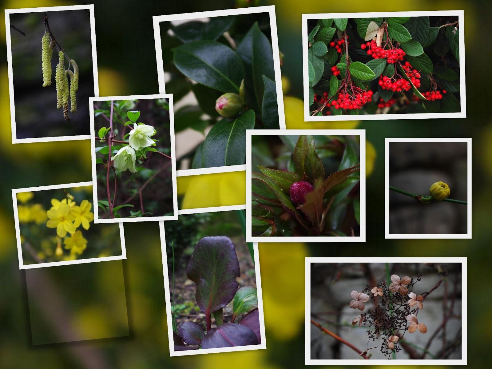 Le jardin des couronnes janvier au jardin for Jardin janvier