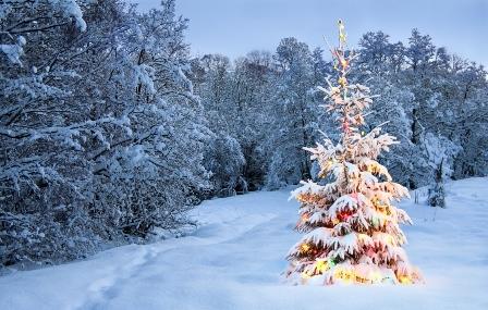 La guarida del Fnix Navidades preciosas Navidades dichosas