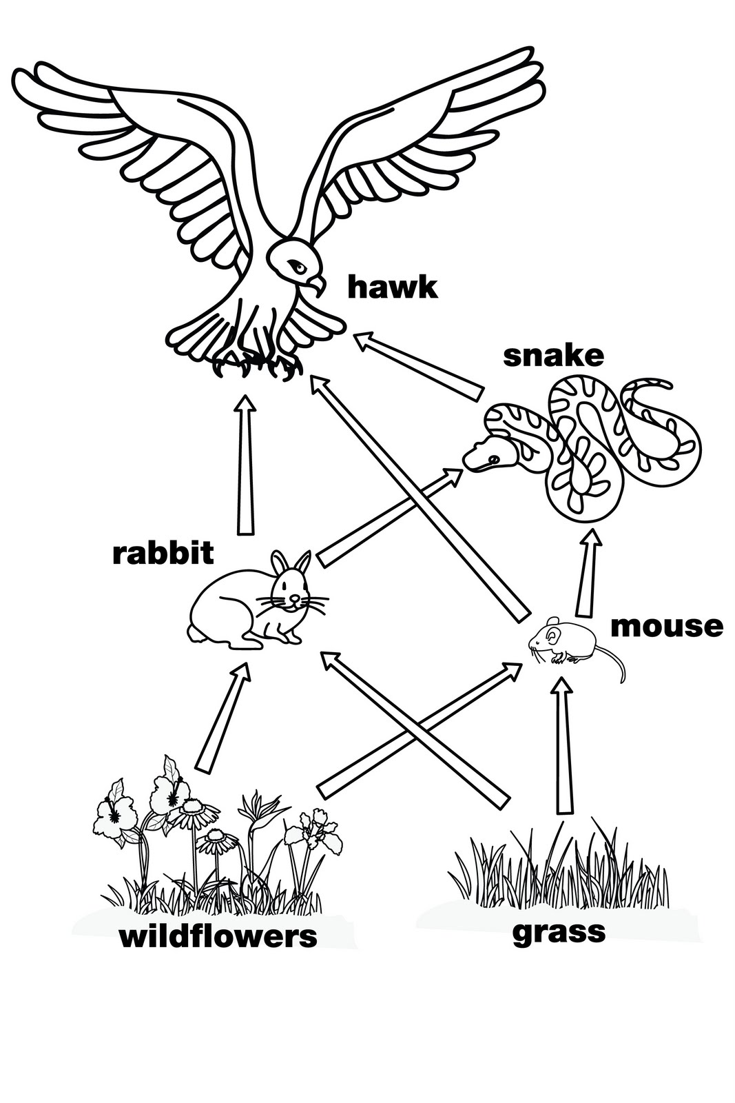food web coloring pages other graphical works