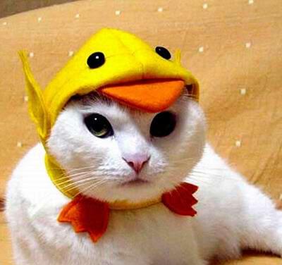 smiješne slike mačke
