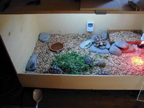 Mondo dei rettili istruzioni per come deve essere un for Lampada tartarughiera