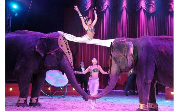 prohiben-actuacion-de-circos-con-animales-ciudades-españa
