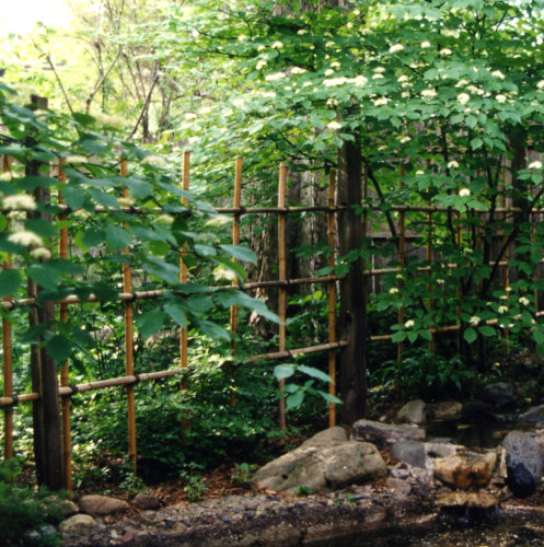 Bamboo grove photo garden fencing
