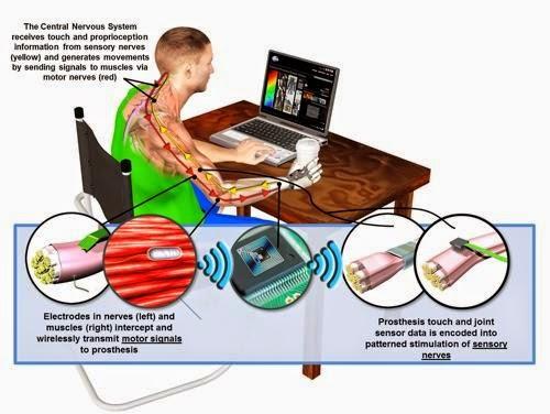 Tecnologia Pel Cos Humà